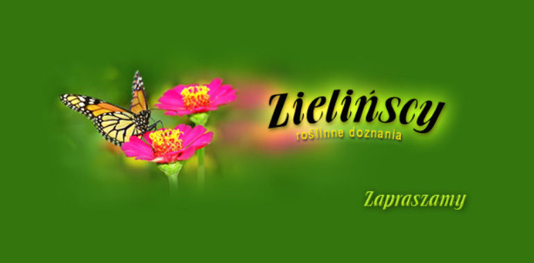 Stare logo Zielińscy